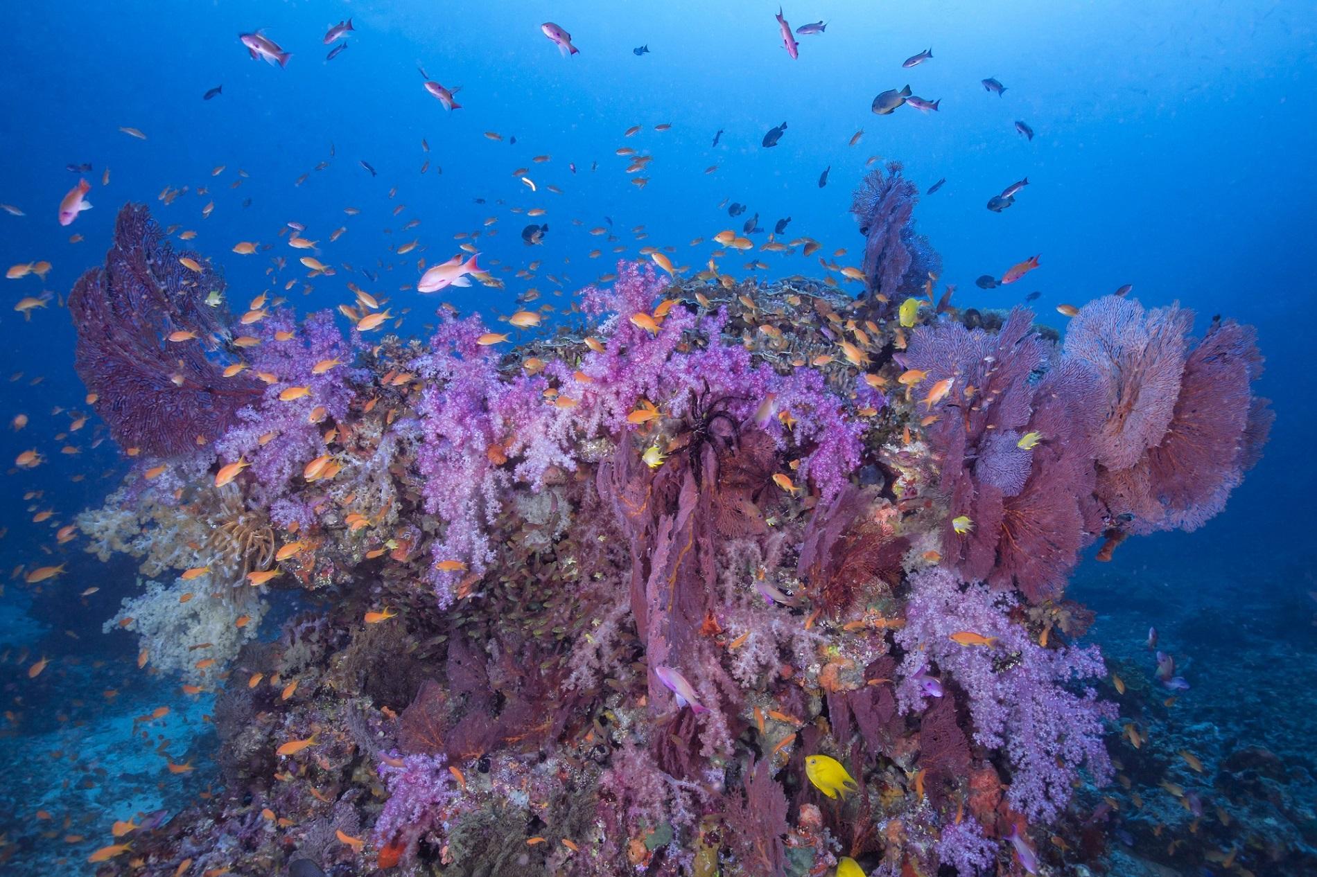 冬天滑雪 夏天去斐济潜水!