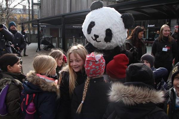 两只大熊猫亮相丹麦动物园获热烈欢迎  他们是真喜欢!