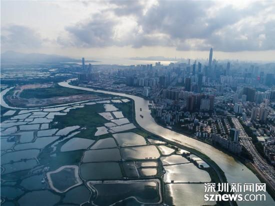 航拍深圳河水质达30年来最佳