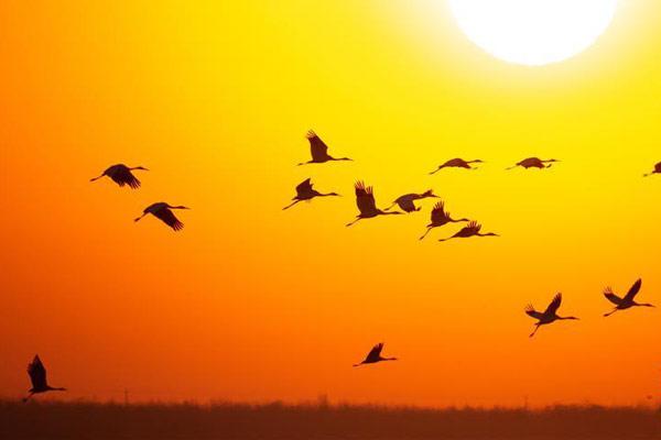 吉林莫莫格迎来候鸟北归高峰