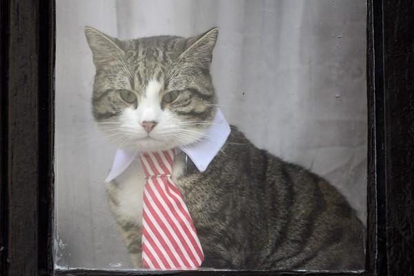 阿桑奇被英国警方逮捕 其养的猫引关注