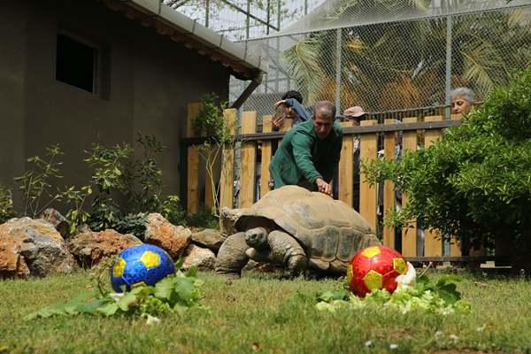 土耳其动物园乌龟庆祝99岁生日 享用蔬菜蛋糕胃口棒棒哒