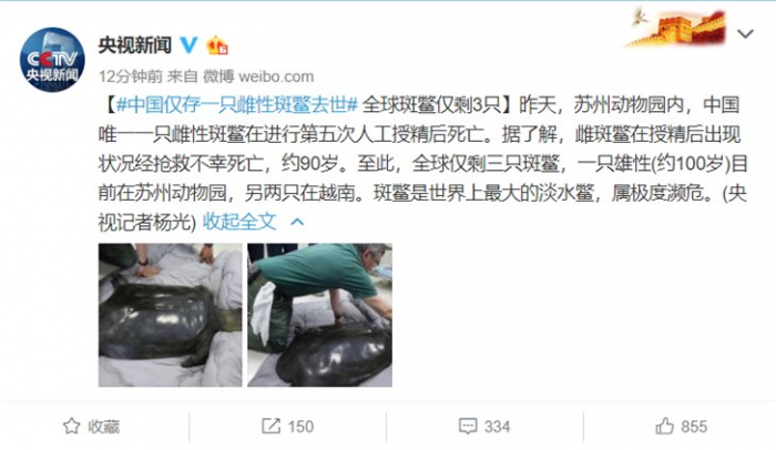 中国最后1只雌性斑鳖离世:世界仅剩3只