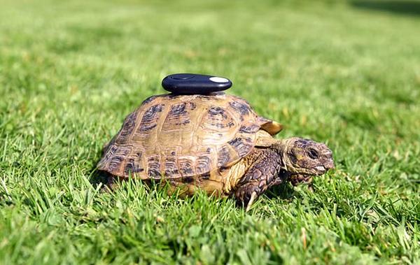 """小乌龟频频""""离家出走"""" 主人无奈用GPS监控"""