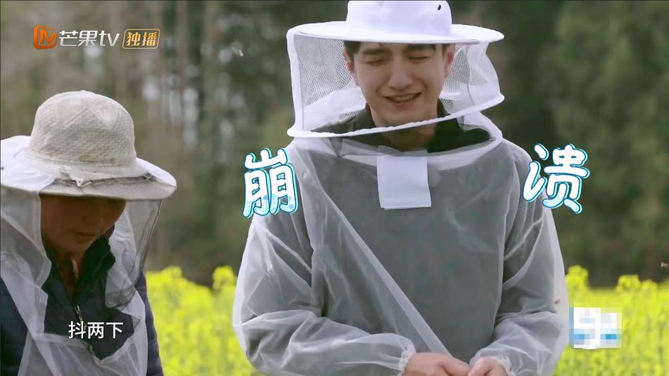 王源蜂场采蜜惨被蛰 杨超越与蜜蜂亲密接触又虎又刚