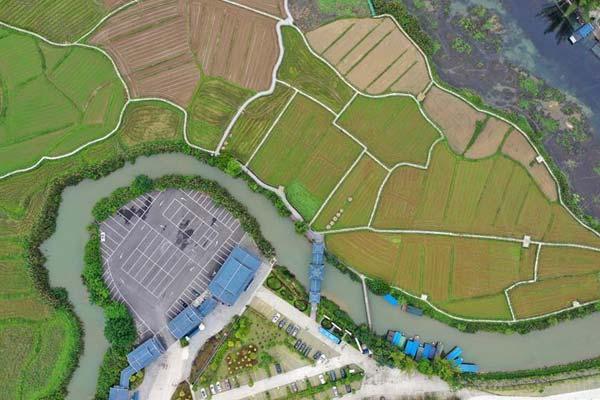 广西靖西:田园风光美