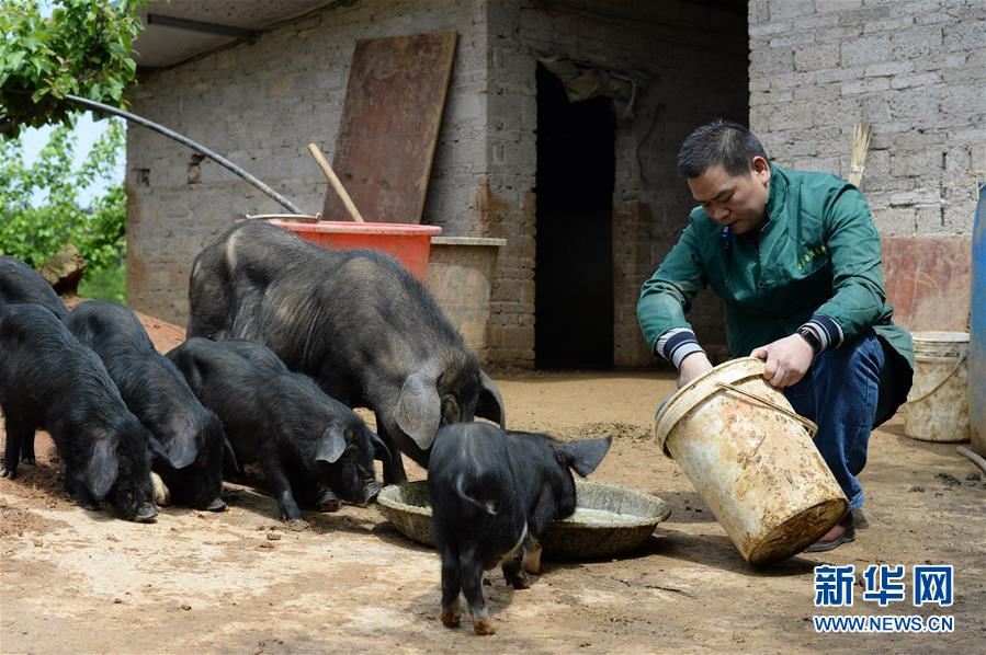 贵州玉屏:养猪能手吴广的创业路
