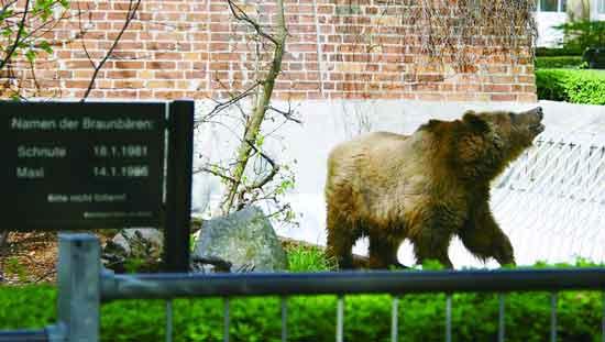 在熊舍追寻老柏林记忆