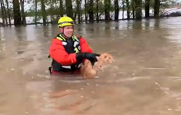 美一猫咪洪水中惊慌失措遇消防员接近企图逃跑
