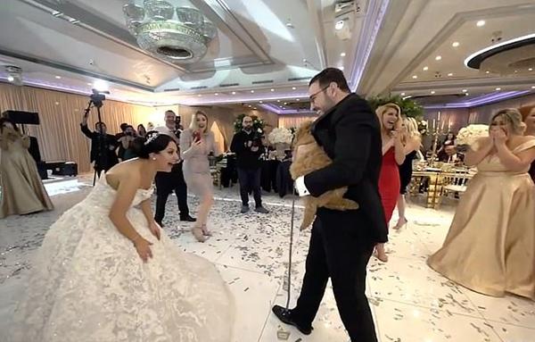 新郎婚礼送新娘心爱宠物狗 新娘当场跪倒落泪
