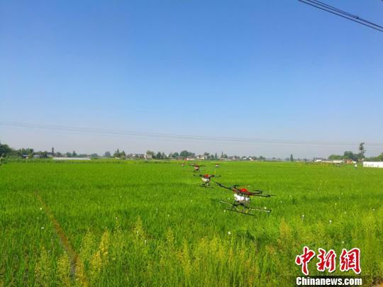 四川广汉启用50余台无人机 植保现代农业面积超40万亩