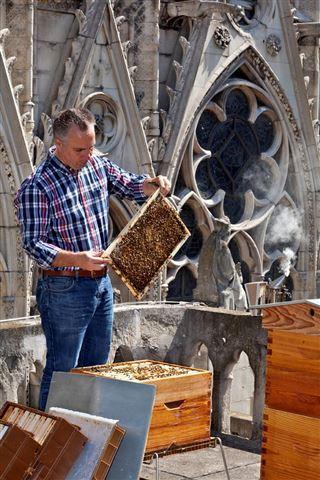 巴黎圣母院18000只蜜蜂生死未卜 養蜂人焦急等消息