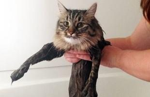 萌猫出浴了!我不是真的胖……