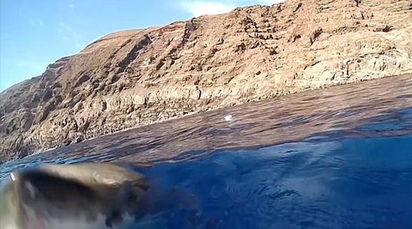 摄影师墨西哥西海域拍摄时险被大白鲨咬摄像机