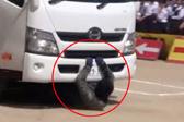 日本中学安全教育模拟车祸 特技演员意外被撞死