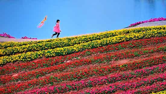 今日谷雨:饮茶、吃椿、赏牡丹 犹是人间四月天