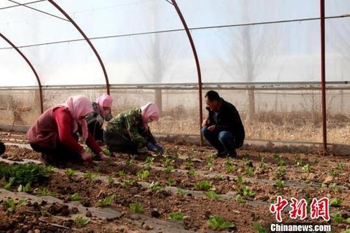 农业农村部:中国农民合作社呈现大群体、小规模特征