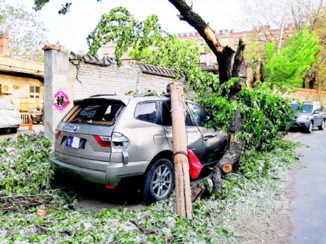 大风闯祸!济南一宝马车被大树砸坏,另有车同时受损