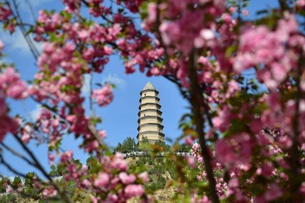 陕西延安:宝塔山下沐春光