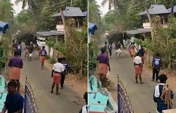 印度一大象游行中失控横冲直撞撞坏汽车顶翻墙