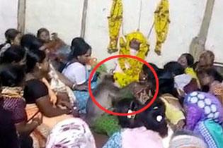 暖心!印度一灰叶猴频频参加当地葬礼安慰家属