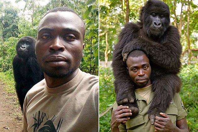 刚果反偷猎游骑兵与大猩猩自拍 站姿表情神同步