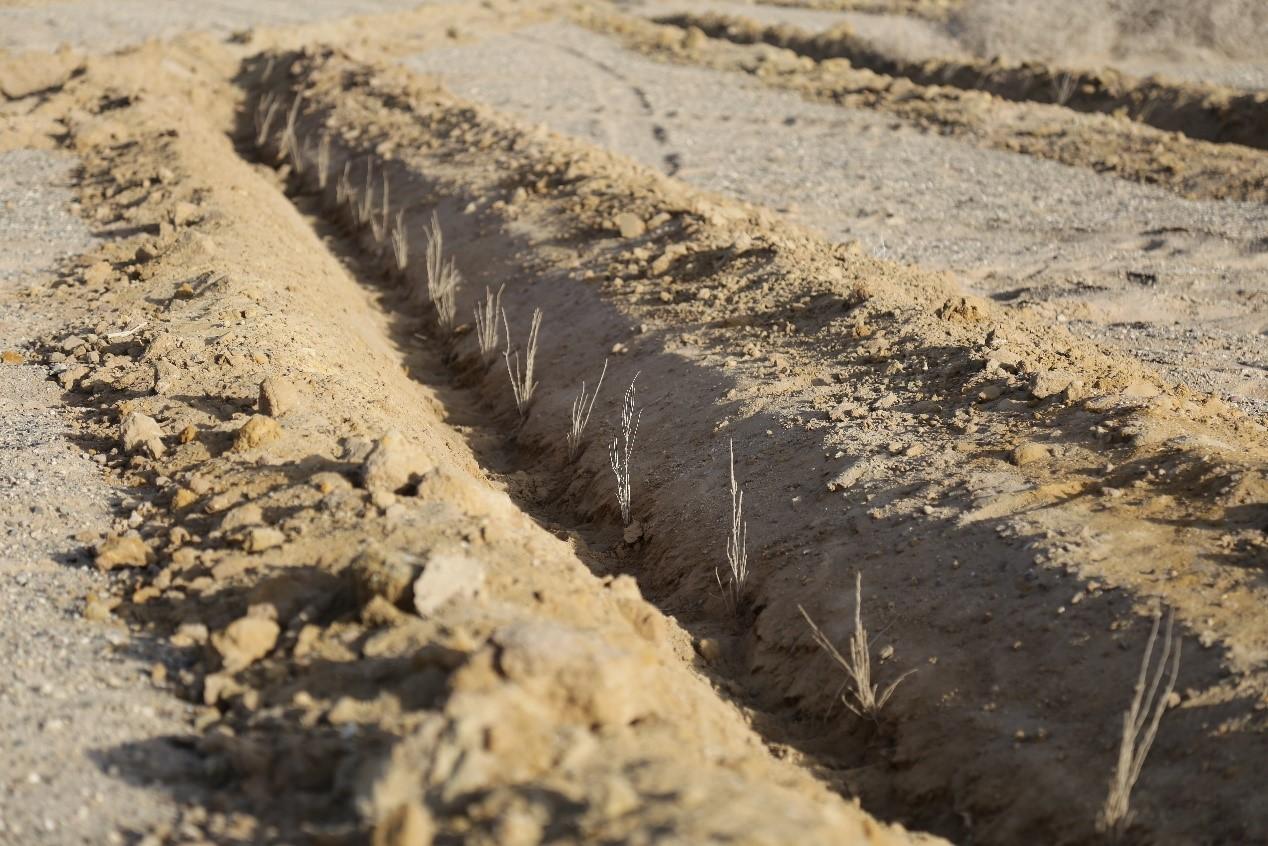 蚂蚁森林3年5亿用户1亿颗树:科技推动人人公益