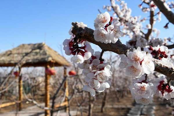 甘肃临泽:前庭后院里的诗意栖居
