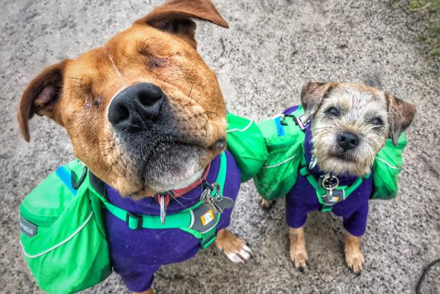 当你的导盲犬!英先天性失明狗狗被朋友暖心守护