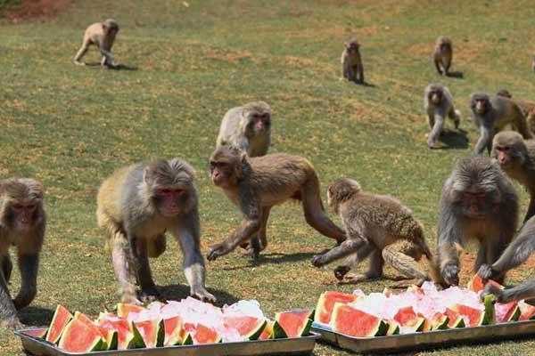 海南:动物乐享清凉