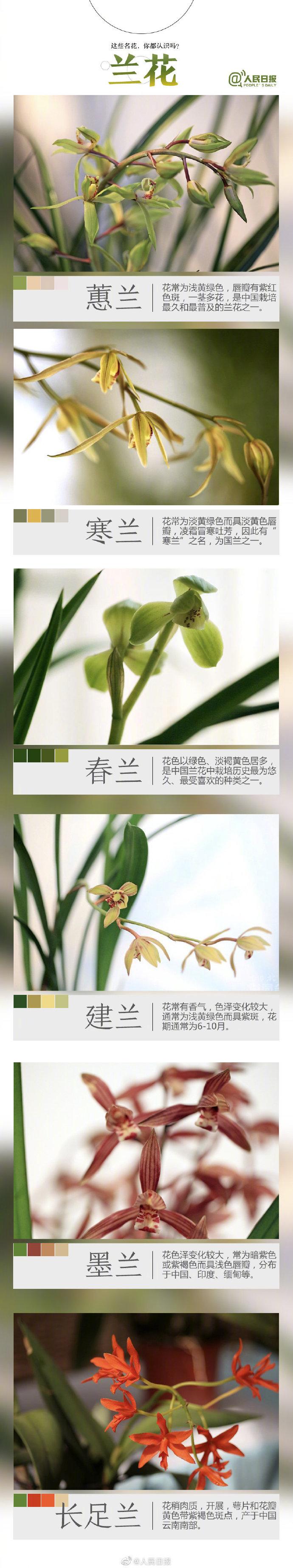 今天起世园会开展啦!九图教你辨别常见花卉
