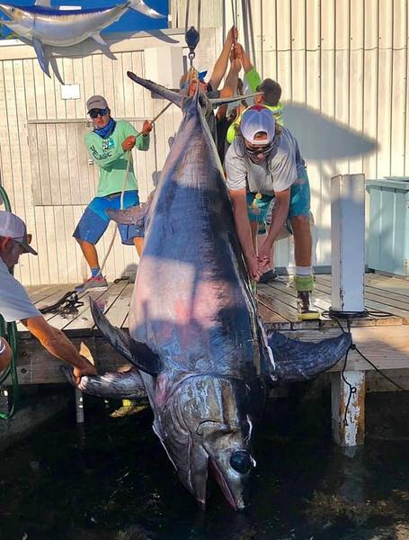 佛罗里达一渔民耗时8小时捕获一条343公斤剑鱼