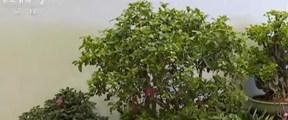 300多种珍稀濒危植物亮相世园会