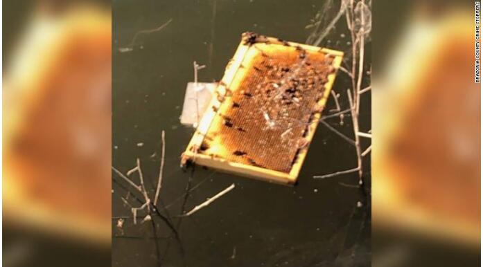 谁干的?! 超过50万只蜜蜂在美国蜂巢被纵火杀害。