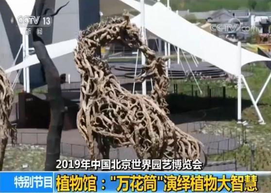 """【2019年中国北京世界园艺博览会】植物馆:""""万花筒""""演绎植物大智慧"""