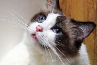果然猫咪才是王道 武汉吸猫咖啡店又成网红打卡圣地