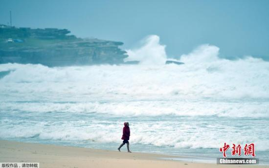 惊险!澳大利亚男子海中游泳 浑然未觉身后有鲨鱼