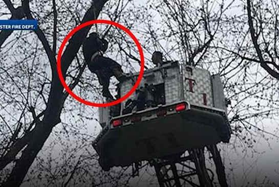 美国一男子为找无人机被卡树上