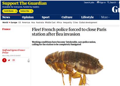 """因跳蚤""""入侵"""",法国一警察局被迫关闭"""