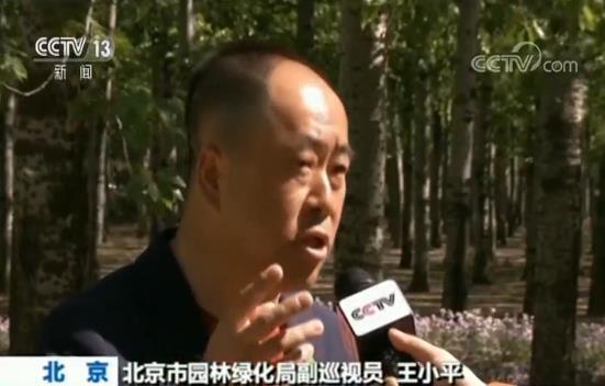 北京:漫天飞絮何时休是MR2娱乐 园林绿化局多措并举综合