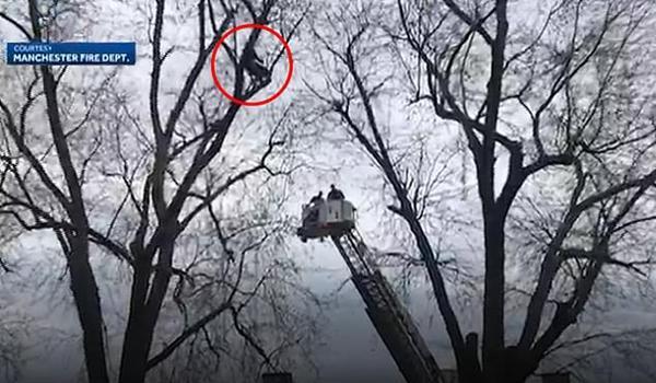 美国一男子为找无人机被卡树上幸得消防员救助