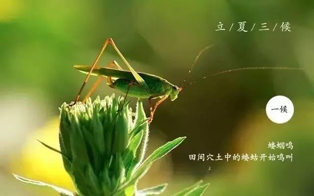 节气|立夏将离春去也 几枝蕙草正芳舒 ,新垣 sena