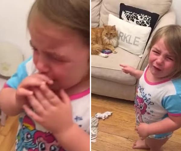 宠物猫拒不归还玩具手机 小女孩为此哭泣不已