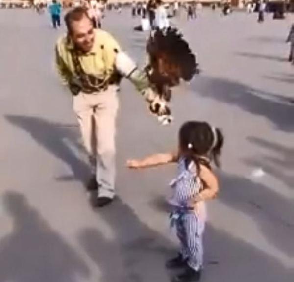 墨西哥女孩被老鹰执着追逐站在头顶 惊恐大哭