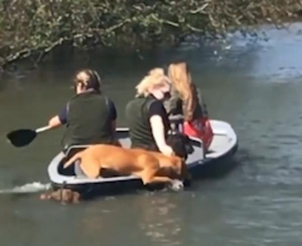 最佳拍档! 英国两只宠物狗伸前爪帮主人划艇