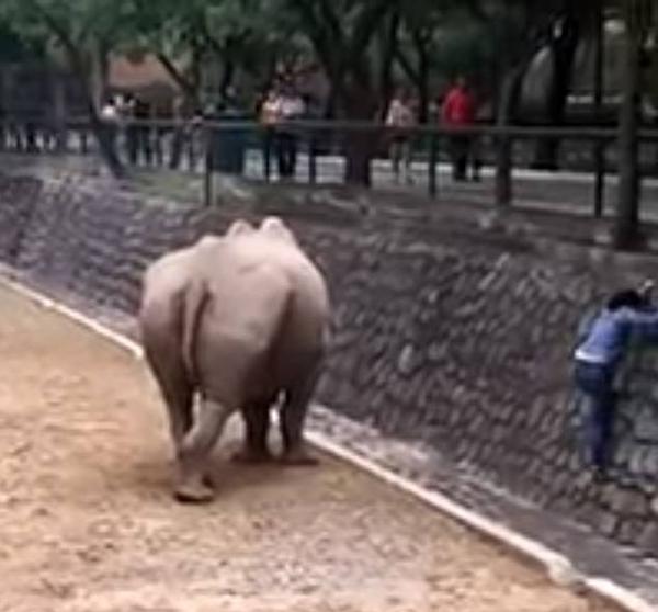 太惊险!墨西哥女子为拿回手机困于犀牛圈中