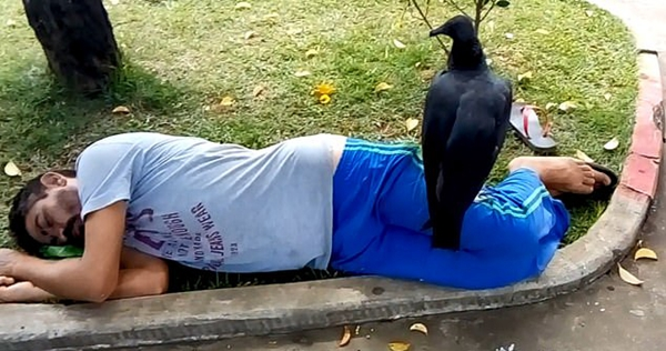 巴西一秃鹫栖身酣睡男子 虎视眈眈令人胆寒