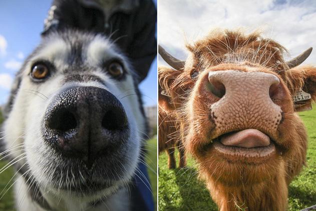 迷之可爱!动物露鼻孔拍照承包一天笑点