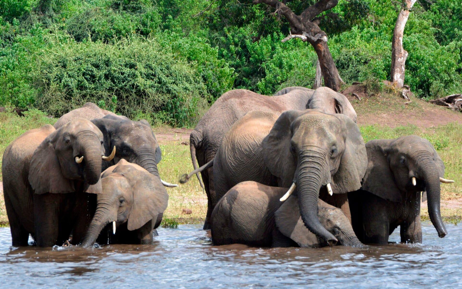 非洲六国呼吁取消象牙禁令 拟通过出售象牙充实动保基金