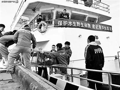 大連非法獵捕斑海豹案后續 最后37頭斑海豹放歸大海